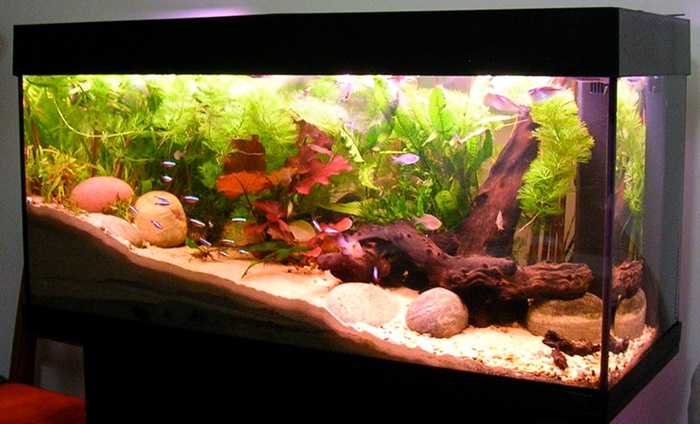beauty home aquarium