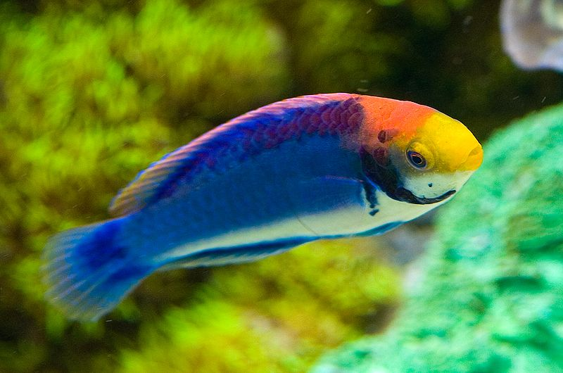 The best freshwater fish for small tanks for Small tropical fish