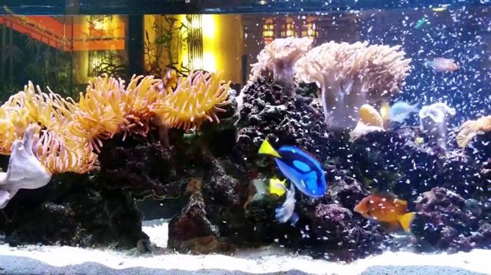 beautiful saltwater aquarium setup