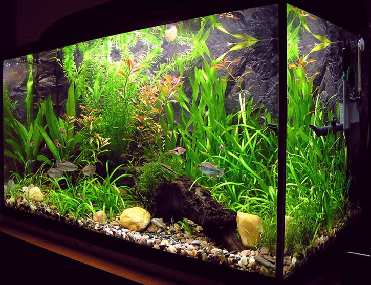black aquascape