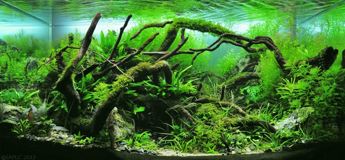 beautiful fish tank plants