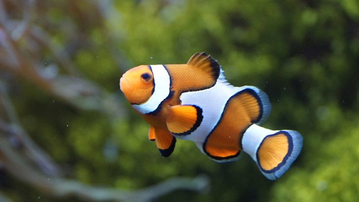 small saltwater fish for small tank