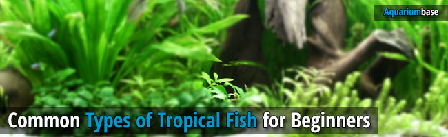 types of tropical fish
