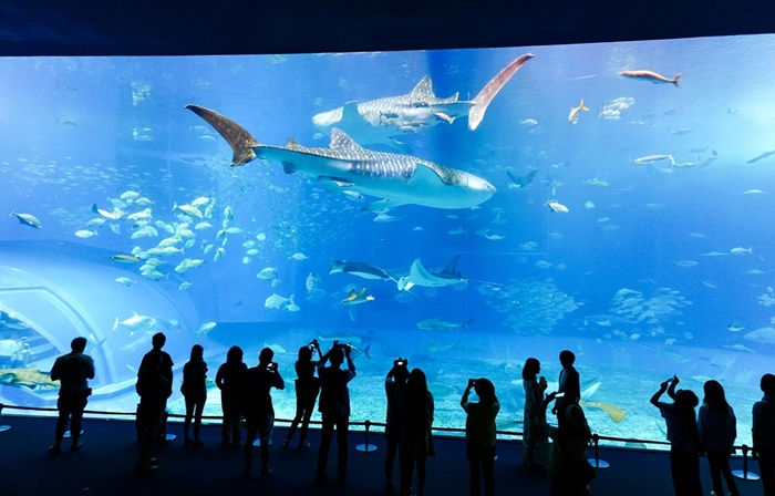 How Large Fish Tank Sizes do You Need? - Aquarium Base