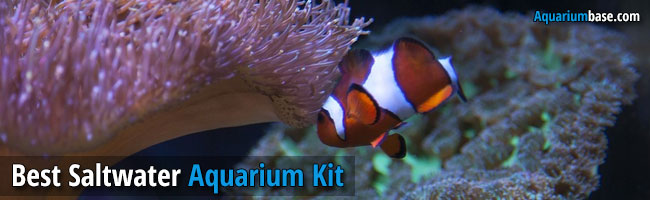 great saltwater aquarium kit