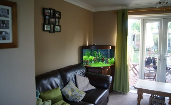 corner fish tank home environment