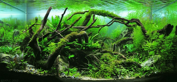 Complete your tank with low light aquarium plants for Freshwater fish tank plants