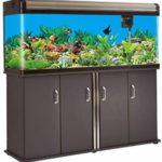 fish tank for arowana