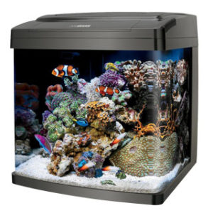 coralife biocube 29 gallon