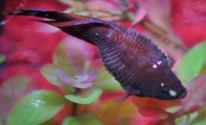 Find out how to prevent the betta fish diseases for Betta fish medicine