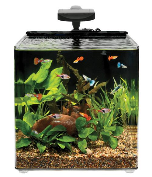 nano aqueon evolve 8 gallon tank