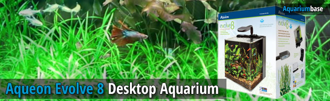 aqueon aquariums desktop aquarium
