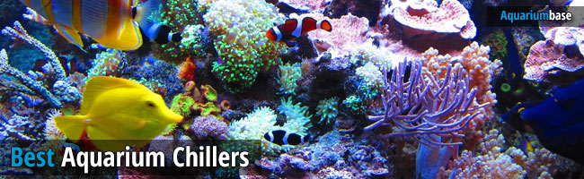 best aquarium chillers 2016
