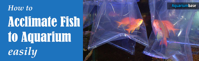 acclimate fish