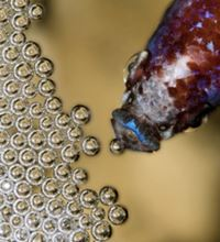 betta fish nest