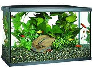 Marina LED 20 Gallon Aquarium