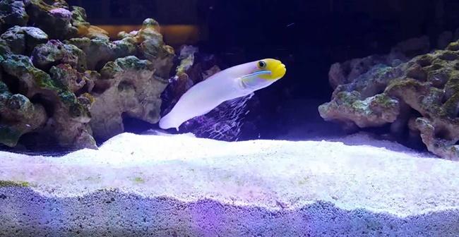 saltwater aquarium sand