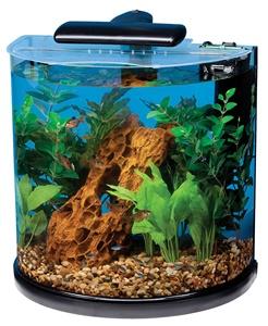 tetra 10 gallon aquarium kit