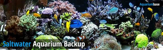 saltwater aquarium backup